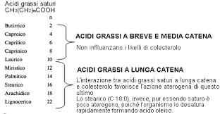 elenco catene degli acidi grassi, brevi, medie e lunghe