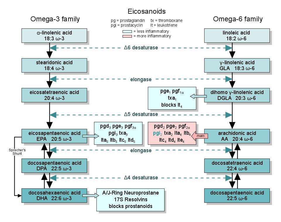 tipi di omega 3 e 6