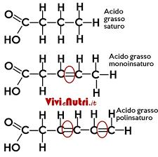 struttura dell'acido grasso saturo e monoinsaturo