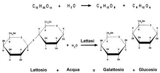 struttura chimica lattosio + acqua = galattosio + glucosio