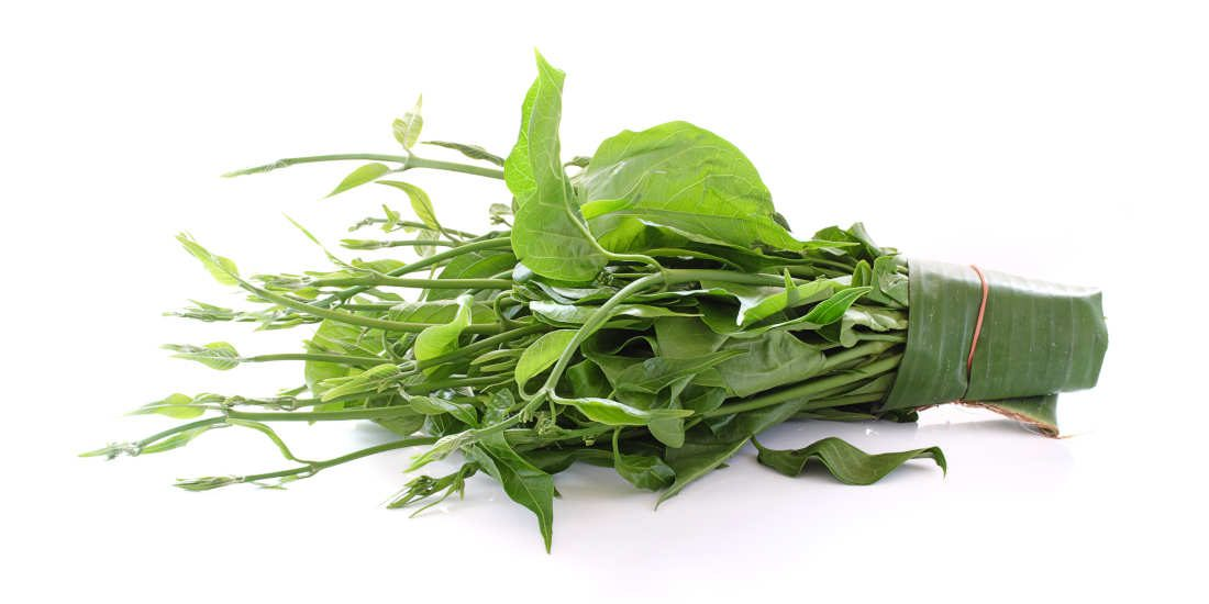 Gymnema sylvestre, la pianta anti-zuccheri per eccellenza